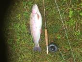 4lb 2oz rainbow - first fish caught at fishery after summer recess